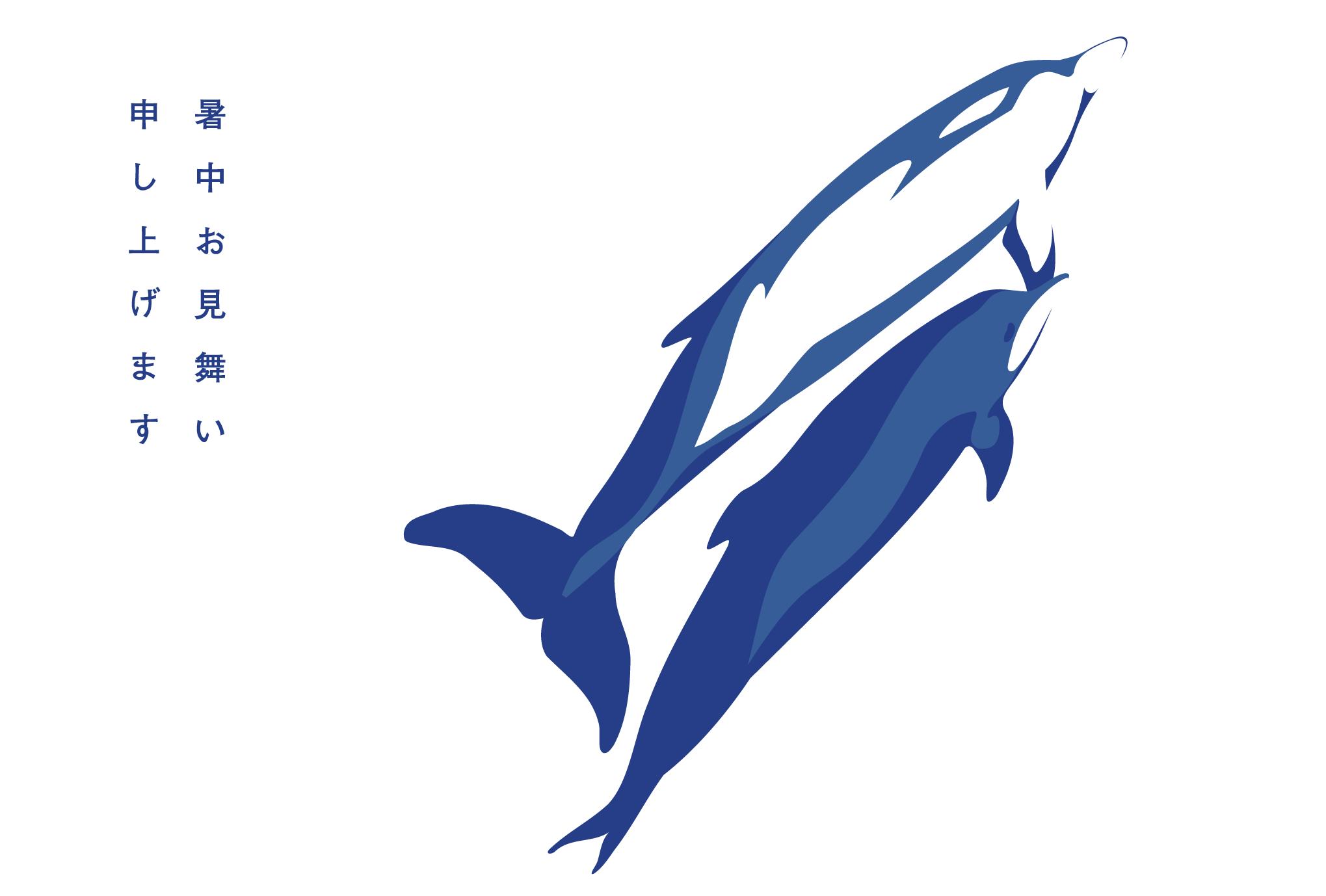 サマーカード01:イルカのダウンロード画像