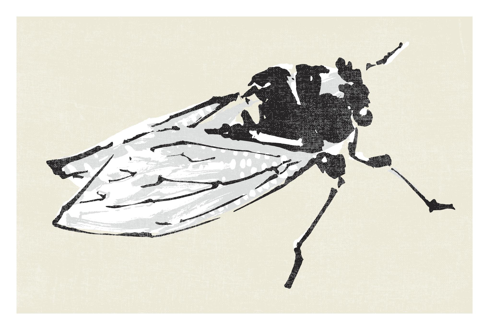 サマーカード55:蝉のダウンロード画像